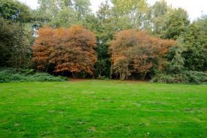 Grasveld met herfstbomen