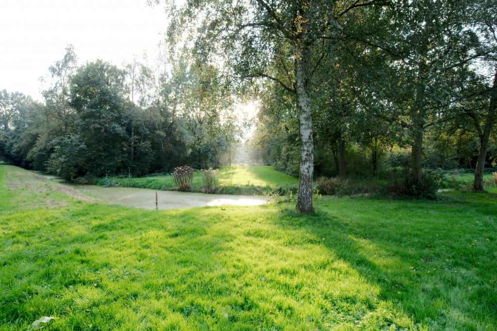 Landschap met groen grasveld, boom, struiken en water