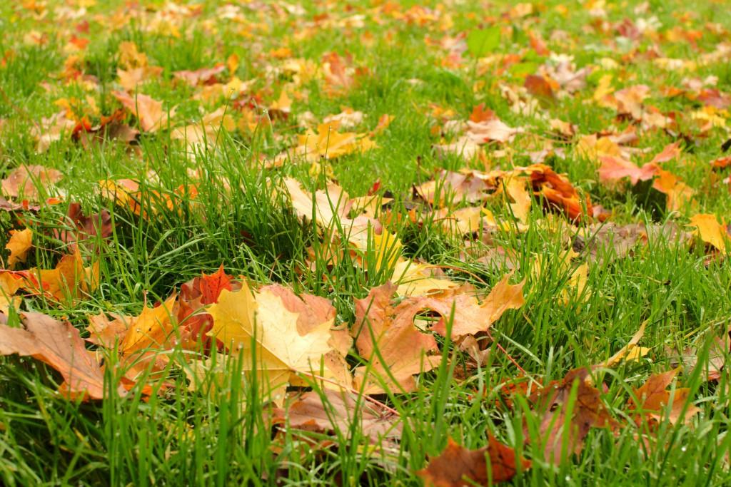 Groen grasveld met gekleurde bladeren