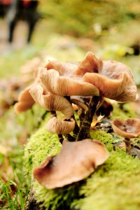 Paddenstoelen in mos
