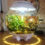 Vissenkom BiOrb Halo 30 liter